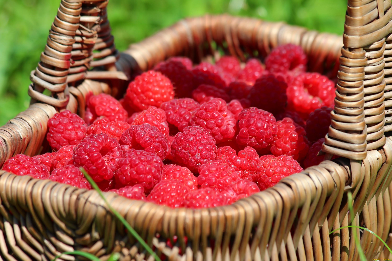 красивые фотографии лета с ягодами любить